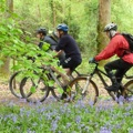 3 riders and lots of bluebells MTB110513